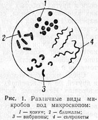 виды микробов