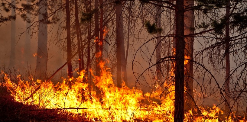 лес горит 1