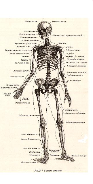 Состав и функции крови — урок. Биология, Человек (8 класс). | 640x323