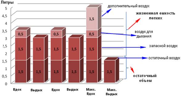 Распределение воздуха в легких человека