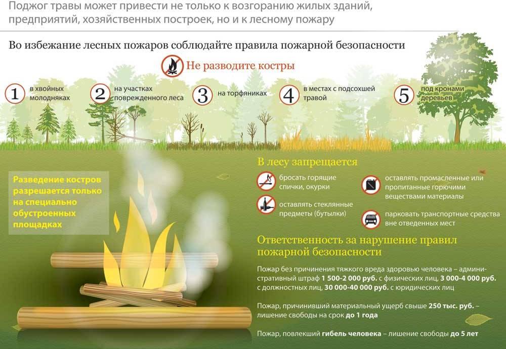 причины пожаров в лесу