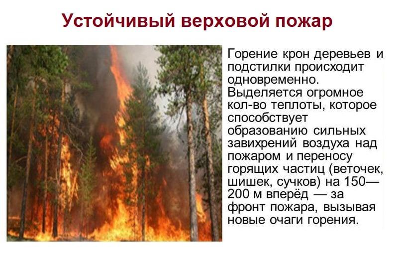 Устойчивый верховой пожар