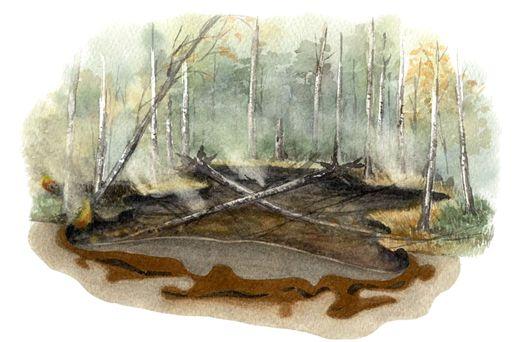 лесные пожары история