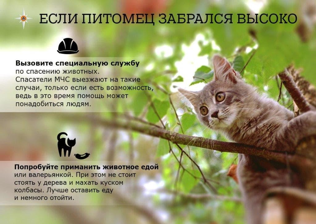 План действия по спасению животного самостоятельно