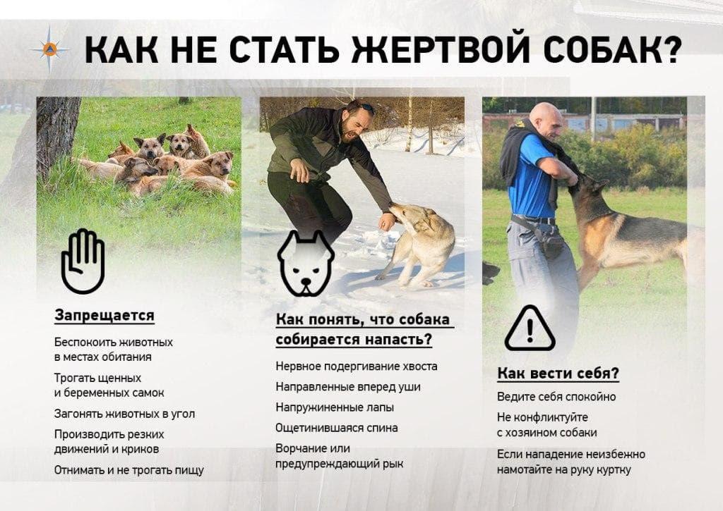 Как не стать жертвой собак