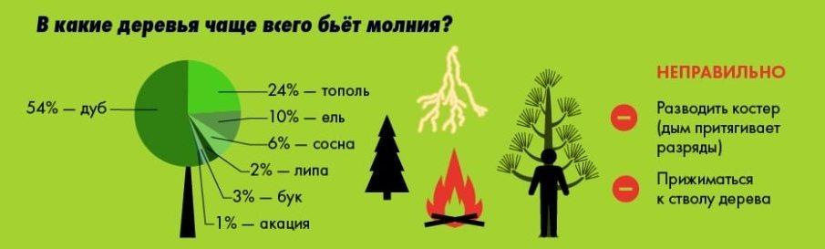 В какие деревья чаще всего бьет молния