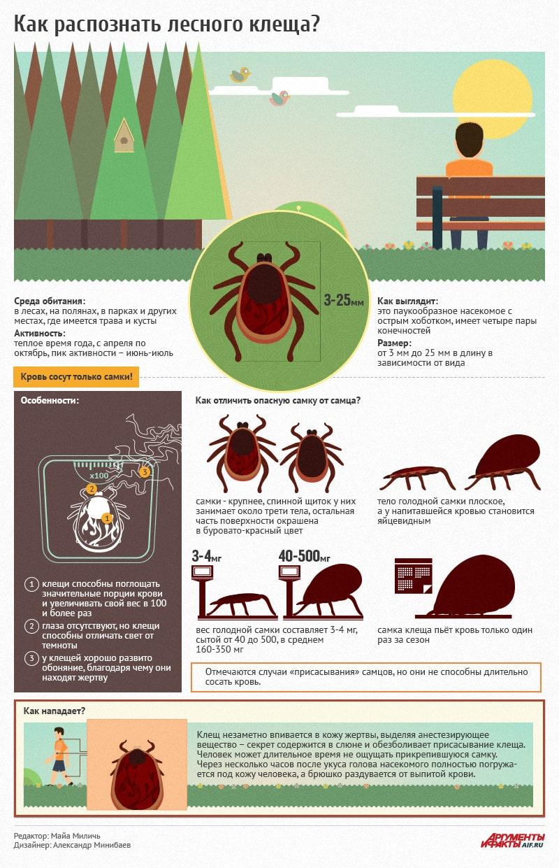 Как распознать клеща лесного