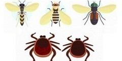 Укусы насекомых (пчелы, осы, шершни, клещи). Оказание доврачебной помощи