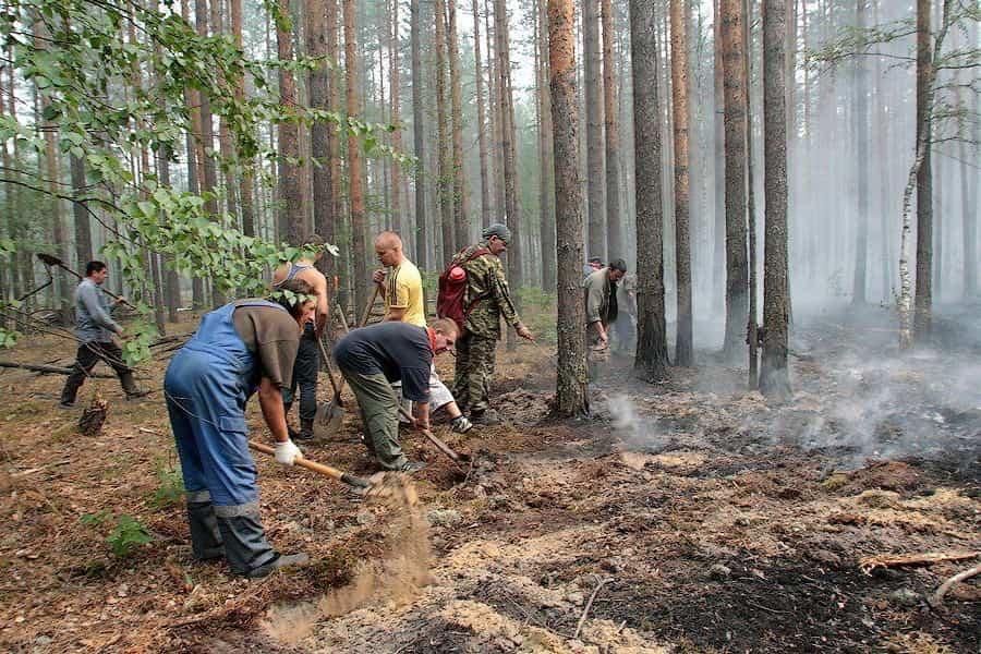 Тушение низового лесного пожара