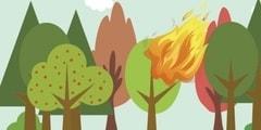 Природные пожары: виды и классификация