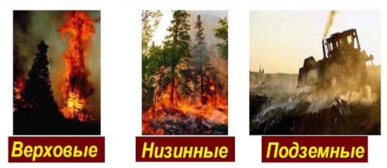 Виды и классификация лесных пожаров