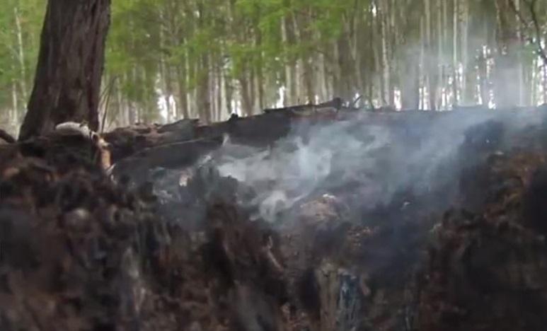 ВБратске два ребенка живьем сгорели влесном шалаше